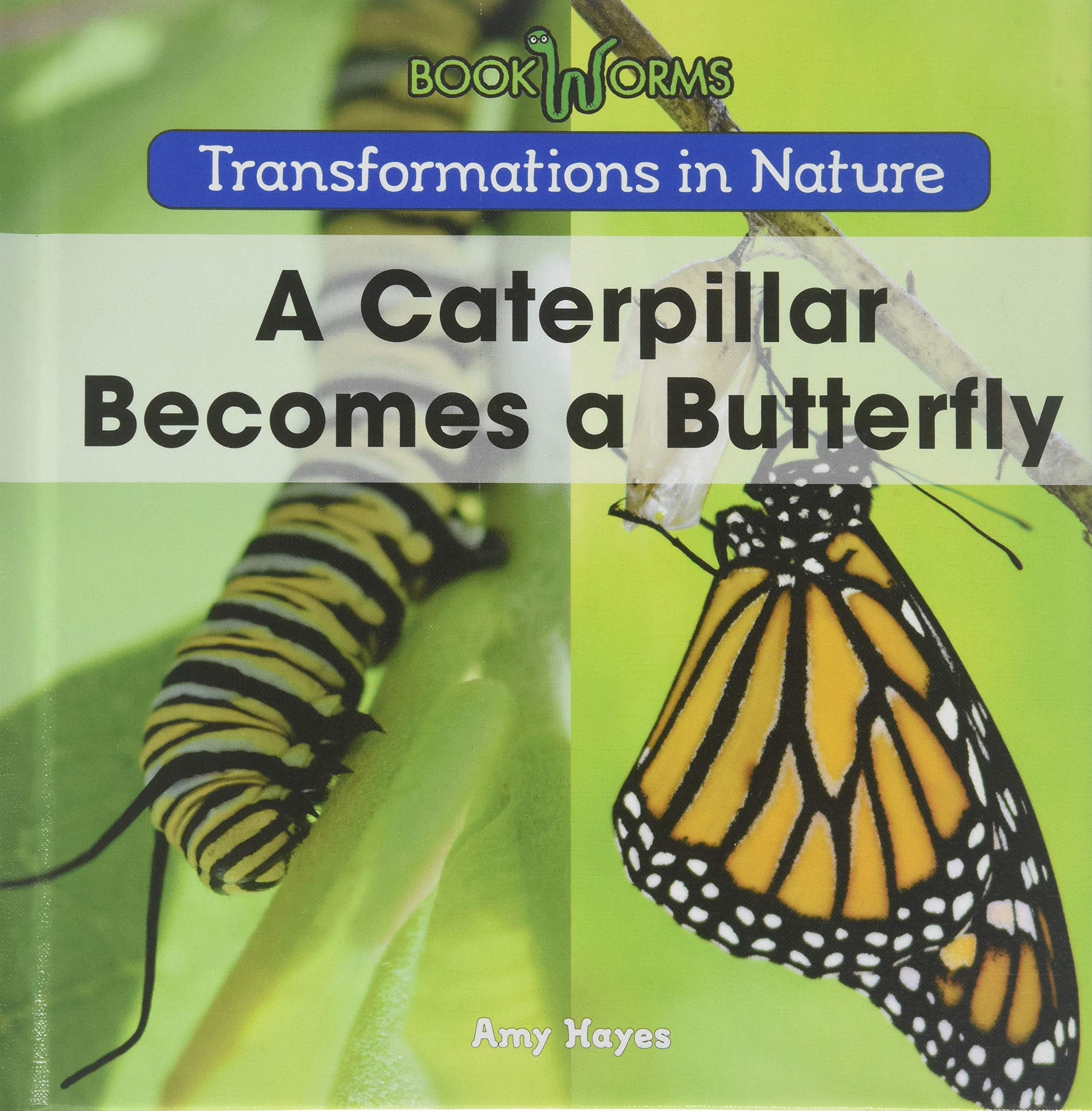 A Caterpillar Becomes a Butterfly (Transformations in Nature) PDF