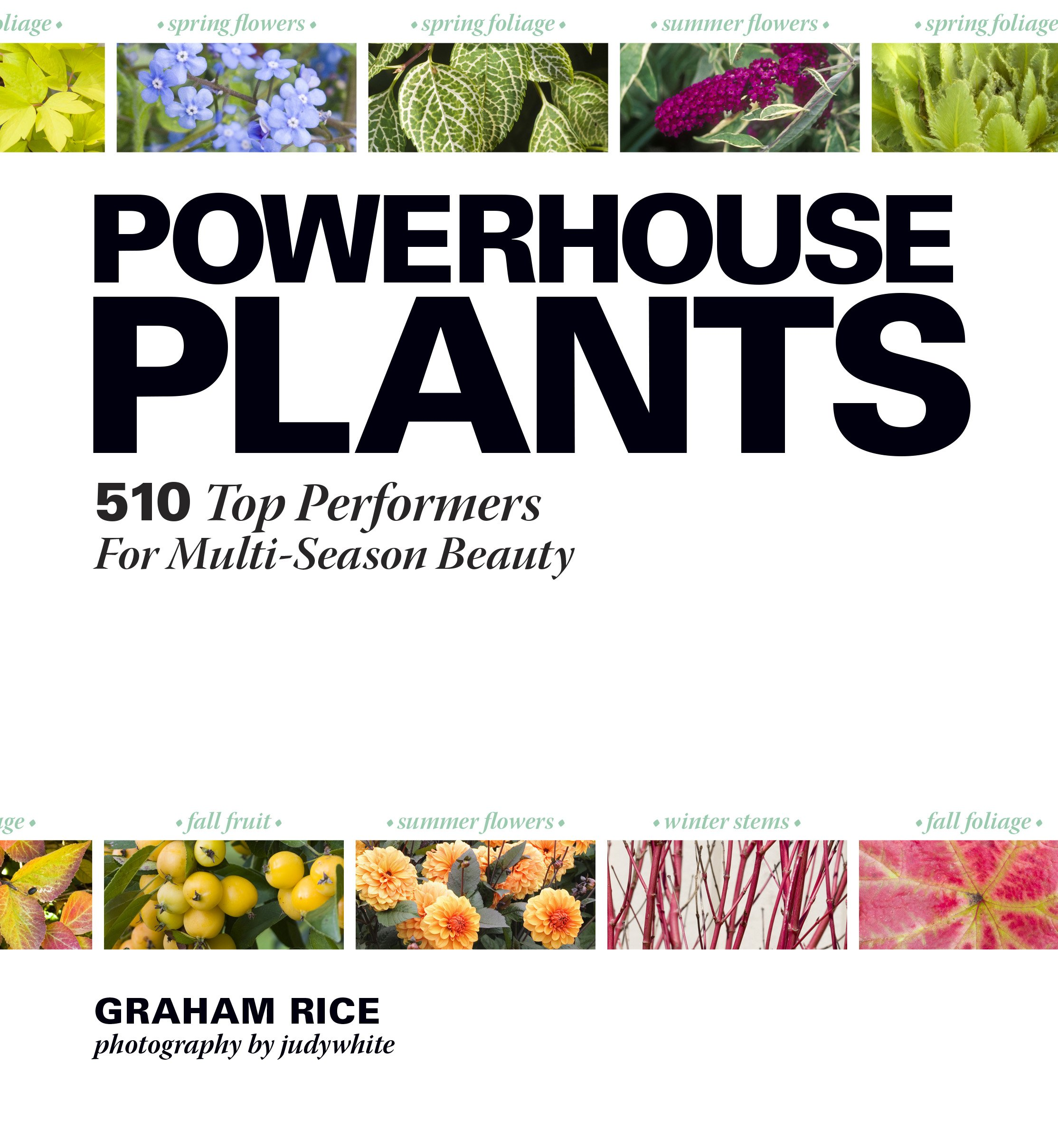 Powerhouse plants 510 top performers for multi season beauty powerhouse plants 510 top performers for multi season beauty graham rice judywhite 9781604692105 amazon books nvjuhfo Gallery