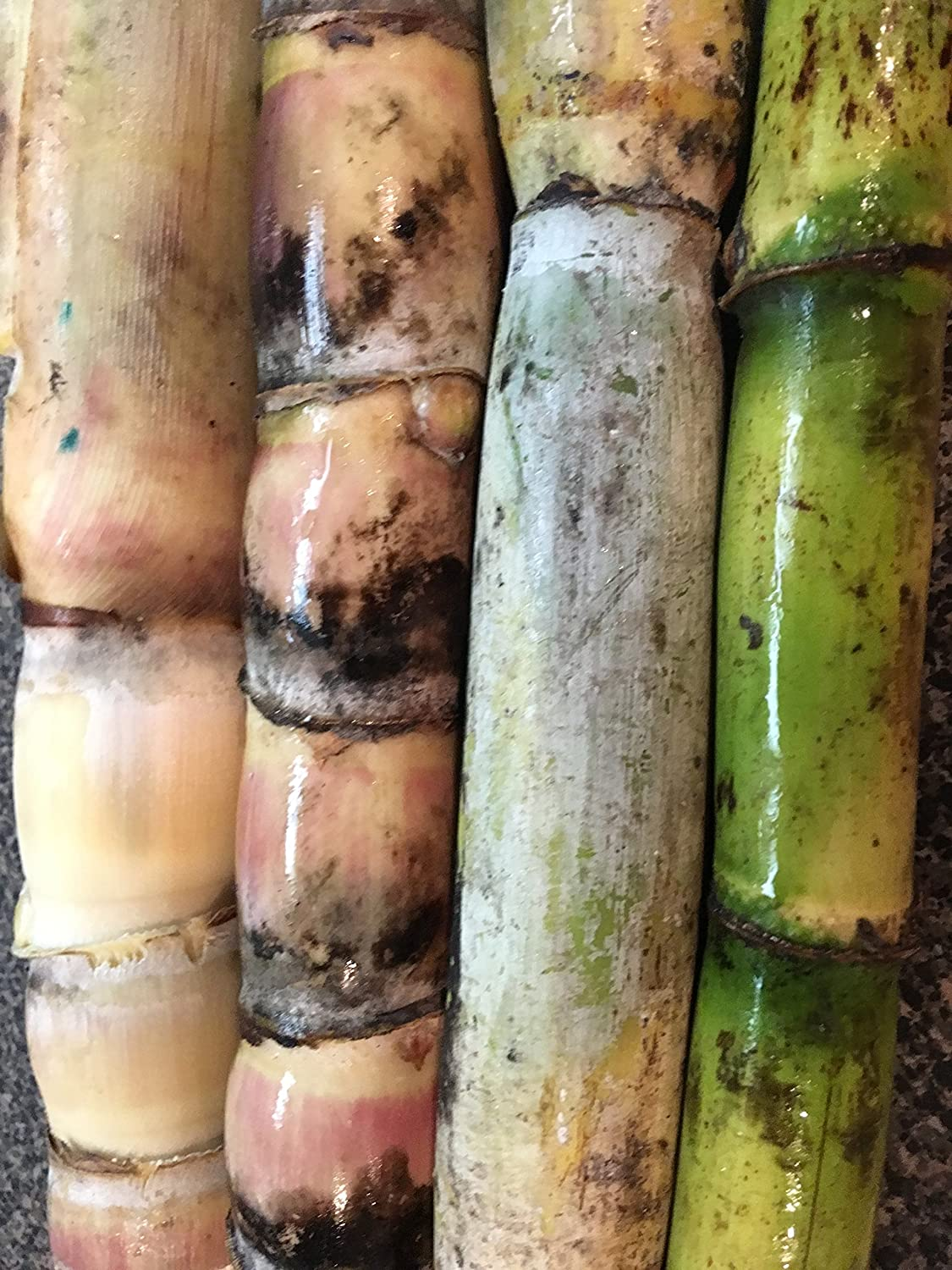 Sugarcane Plants Varieties of Green/Black-Perennial Organic Sugar Cane 6 Sticks/Sprouts For Planting. Ornamental Grass Raw Sugar Cane -Canne a Sucre-2 in Each Variety