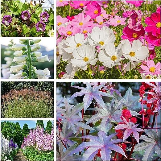 Plantas de crecimiento rápido - semillas de 6 especies de plantas con flores: Amazon.es: Jardín