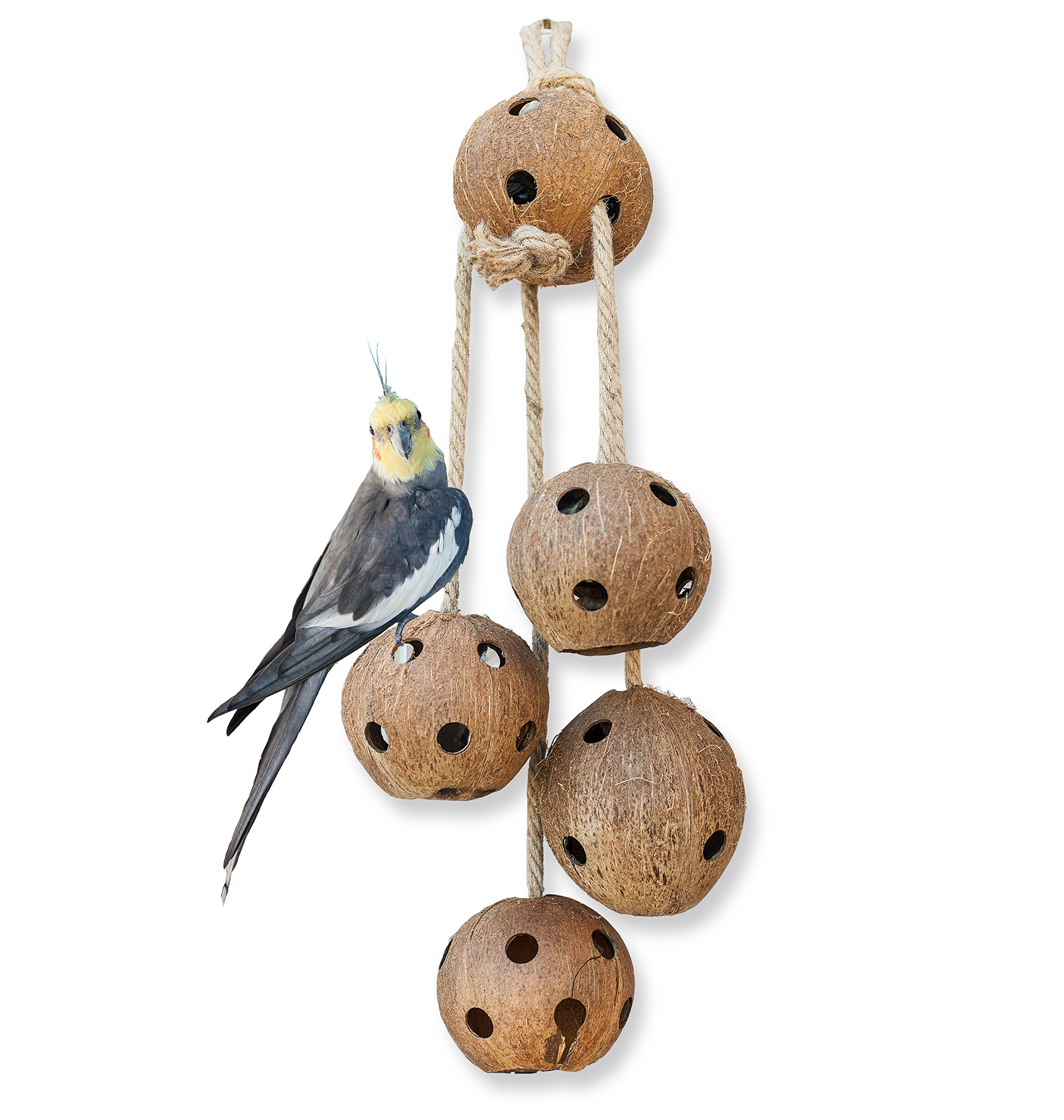 Pet Magasin Hand Made Bird Toys - Interactive Large Coconut Shell for Birds of All Kinds