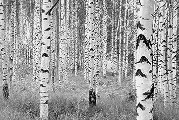 Fototapete birkenwald  Fototapete - Birkenwald: Amazon.de: Baumarkt