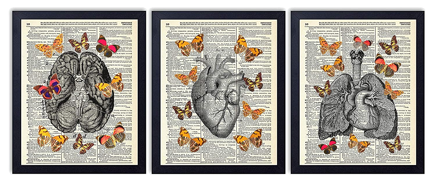 Anatomy With Butterflies 3 Piece Set, Brain, Heart and Lungs with Butterflies Art Prints, Bedroom Decor on Vintage Dictionary Book Pages, Contemporary Modern Farmhouse Boho, 8x10 inches each, Unframed