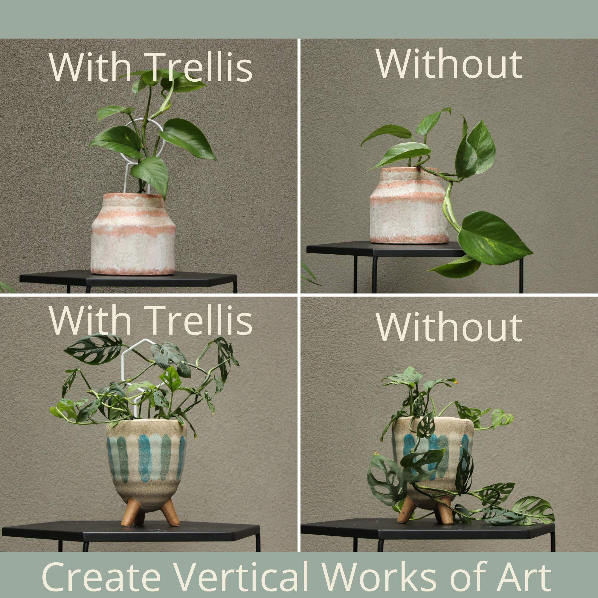 Plant Trellis Vines Trellis Display for Climbing Potted Plants ...
