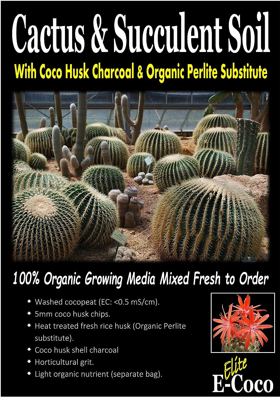 gaixample.org Garden & Outdoors Cacti & Succulents Cactus ...