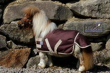mini pony im garten halten