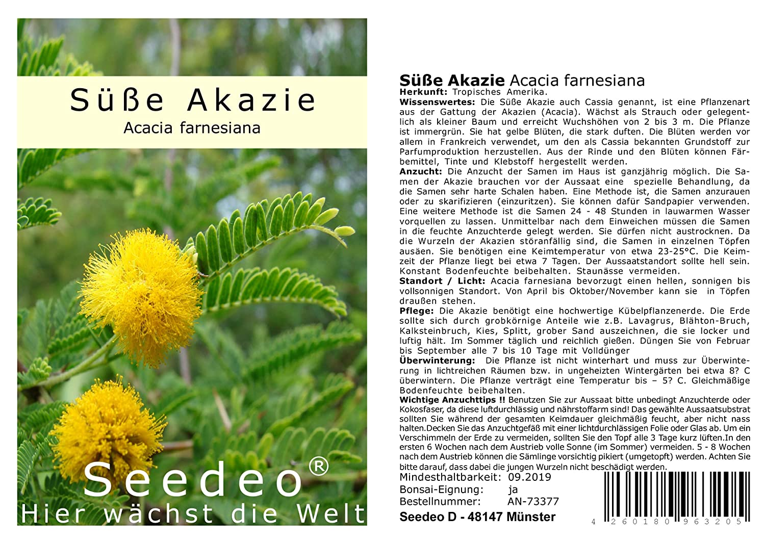 Seedeo® Süße Akazie (Acacia farnesiana) 20 Samen Seedeo Bonsai