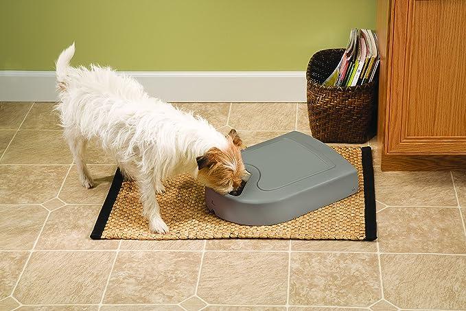 Petsafe, dispensador de 5 comidas para mascotas, automático, programación para 5 días, 5 bandejas de 165 g: Amazon.es: Productos para mascotas