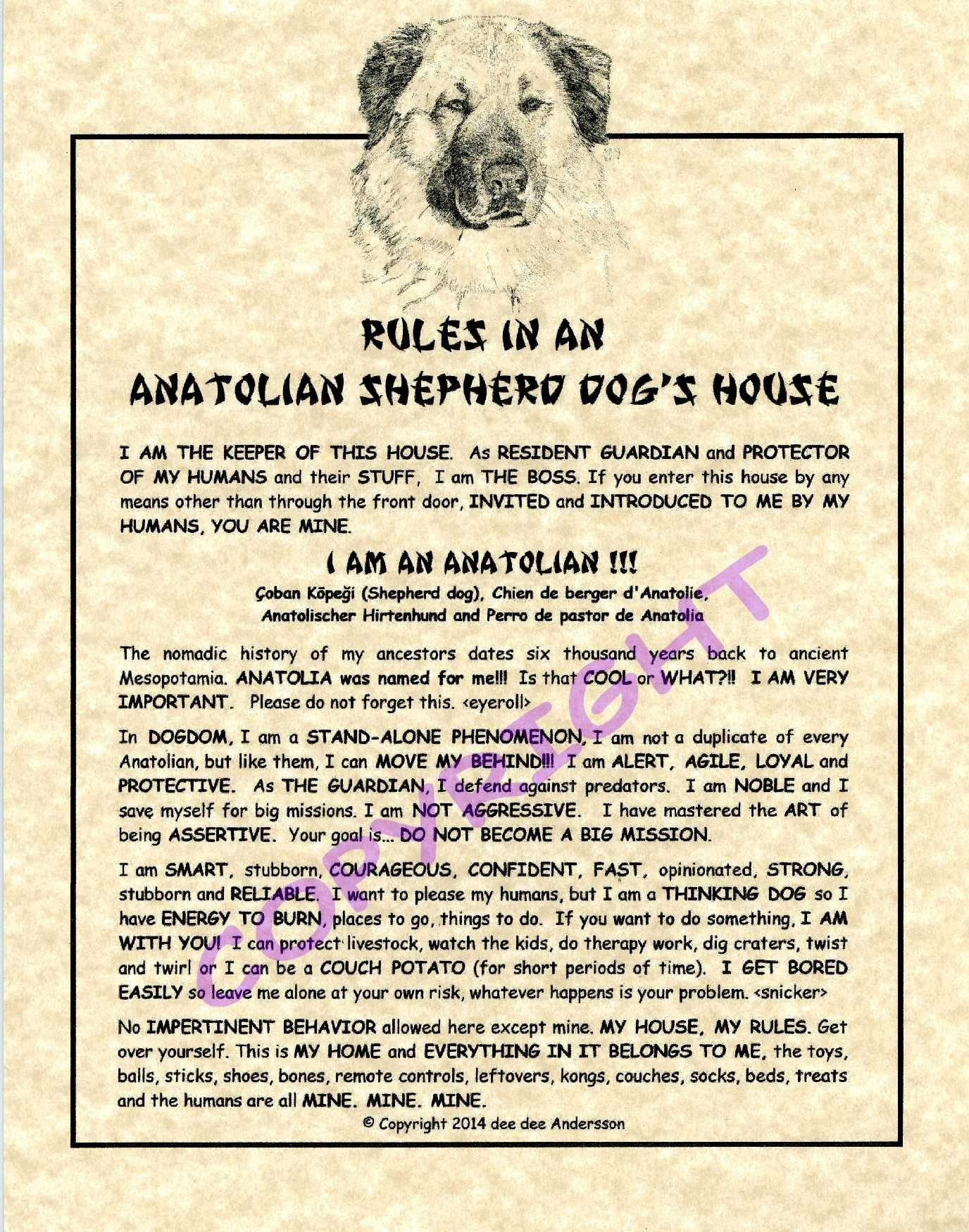 Rules In An Anatolian Shepherd Dog HOuse 1