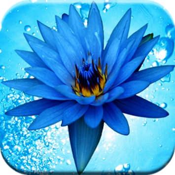 3D WATER FLOWERS LIVE WALLPAPER