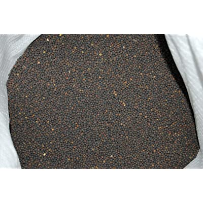 Hairy Vetch Legume Seed by Eretz - Willamette Valley, Oregon Grown (50lbs) : Garden & Outdoor