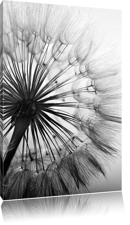 Genial Schöne Leinwandbilder Referenz Von Schöne Pusteblume Schwarz/weiß, Format: 80x60 Auf Leinwand,