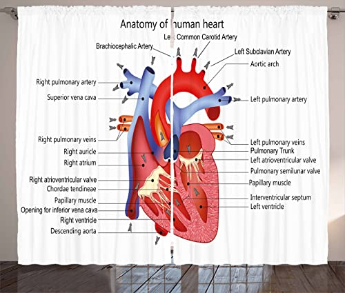 Ambesonne Educational Curtains, Structure of The Heart Human Body Anatomy Organ Veins Cardiology, Living Room Bedroom Window Drapes 2 Panel Set, 108 X 63 , Multicolor