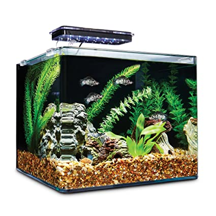 Amazon.com : Imagitarium Frameless Freshwater Aquarium Kit, 6.8 GAL : Pet Supplies
