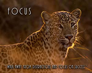 Apple Creek Leopard Wildlife Motivational Poster Art Print 11x14 Focus Zoo Cat School Classroom Wall Decor Pictures