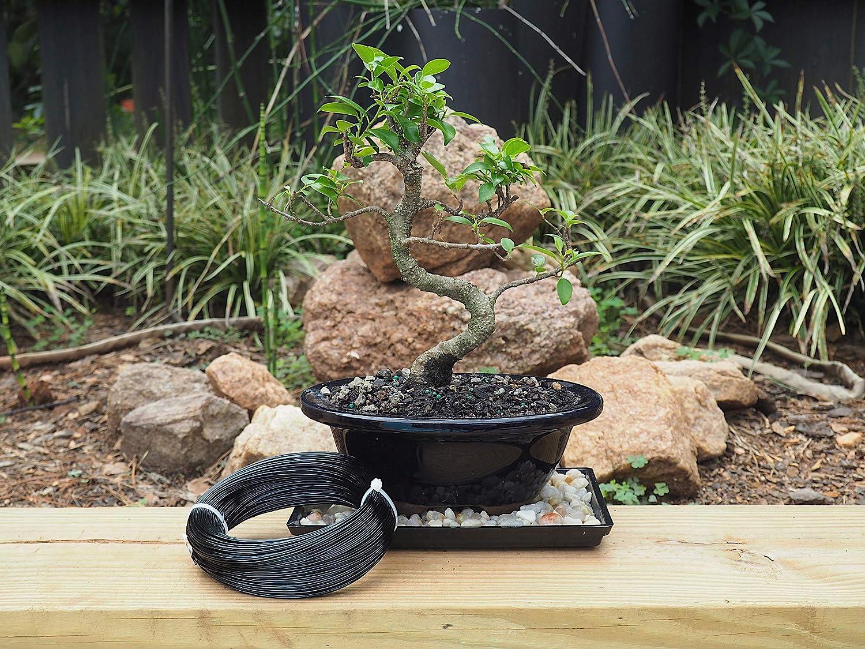 Wiring A Bonsai