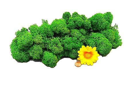 Muwse Islandmoos 1AV 50g Grün vorgereinig, präpariert & gefärbt! Weich, lichtecht & haltbar! Dekomoos Floristikmoos Bastelmoo