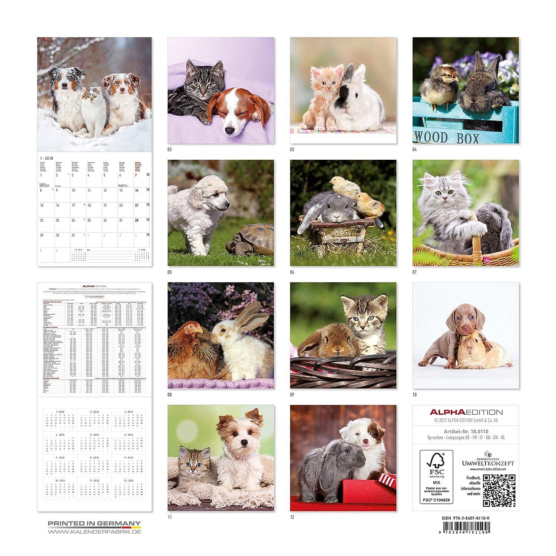 """Calendario da muro """"Animali amici"""" 2018 30x30 cm Alpha Edition 18.0110"""