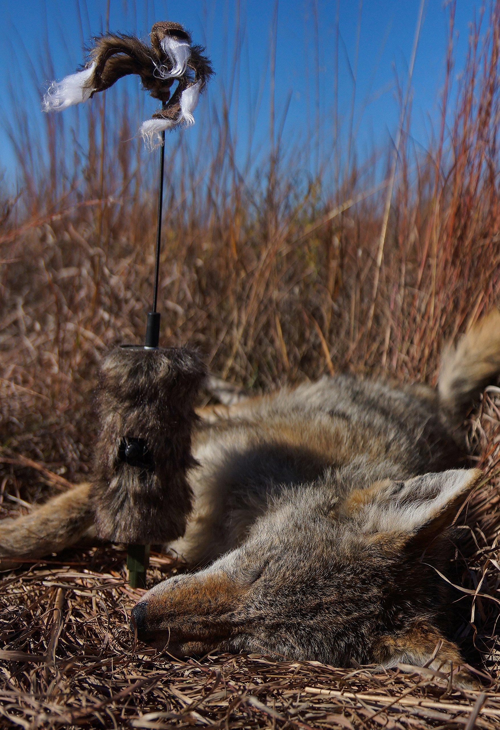 MOJO Outdoors Critter Predator Decoy by MOJO Outdoors (Image #3)