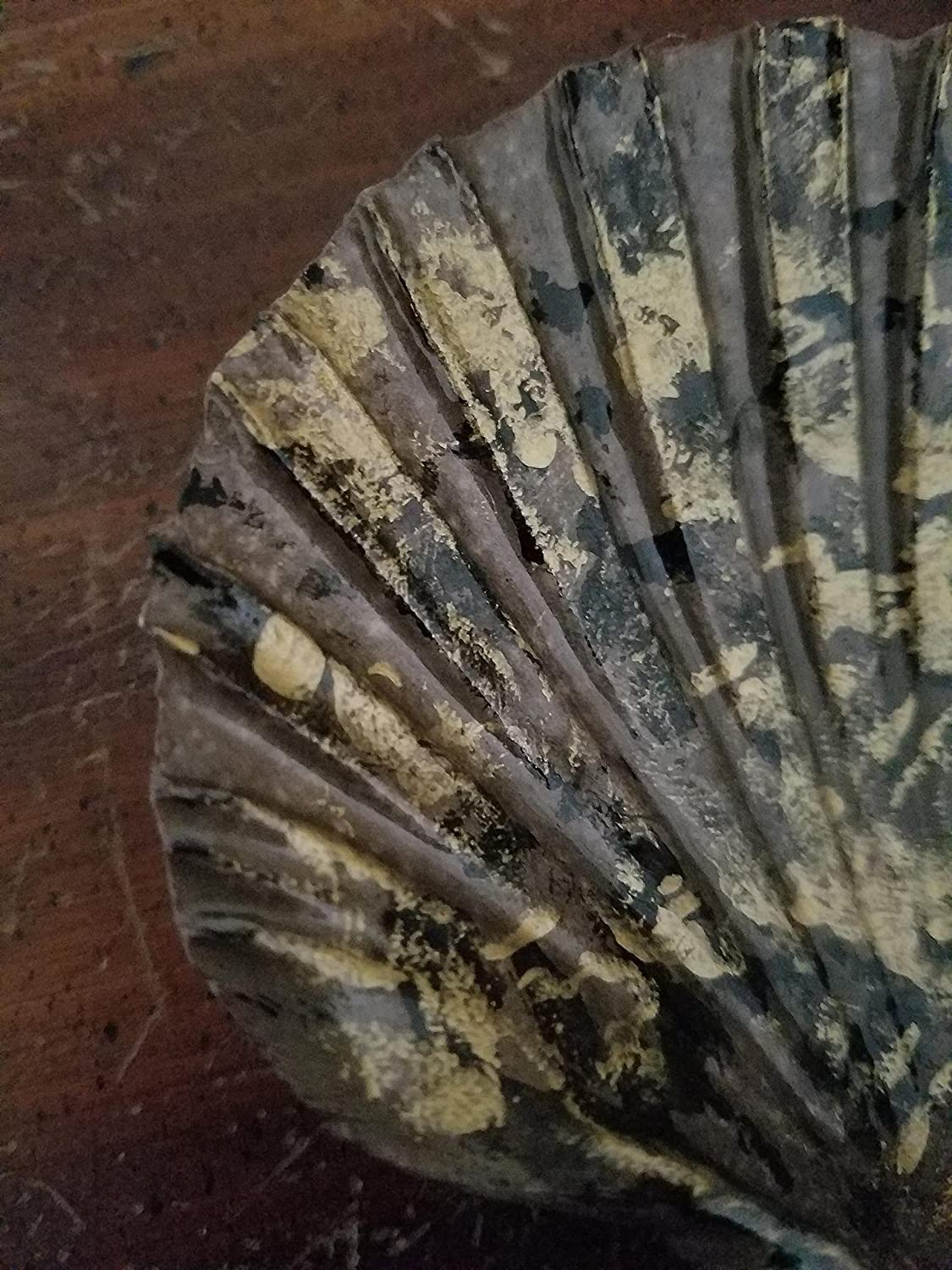 Decorative Soap Dish and Gold Bronze Nautical Themed Gift Hand Painted Scallop Shell Jewelry Key Black