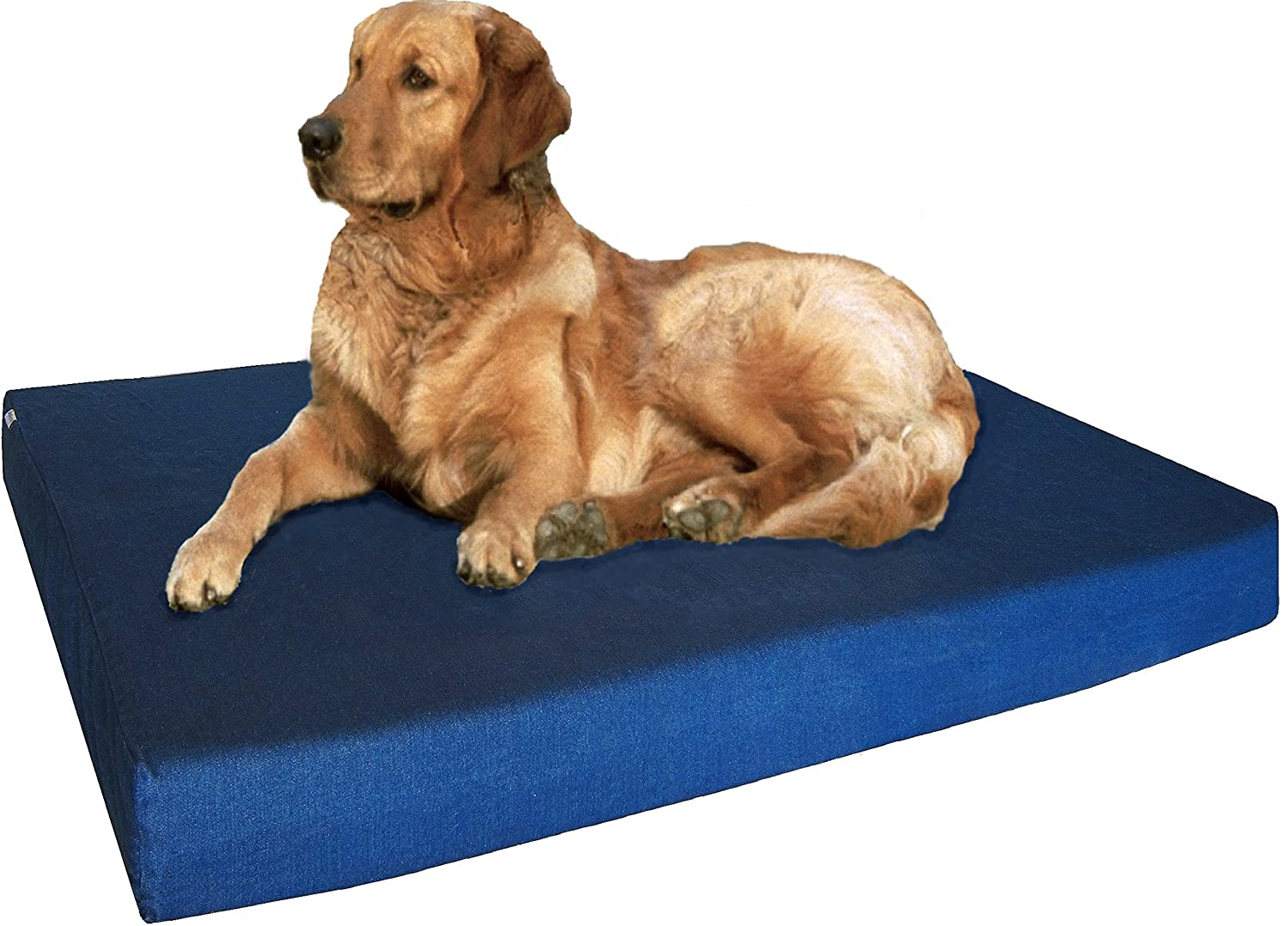 bed orthopedic indestructible the beds talking dog best