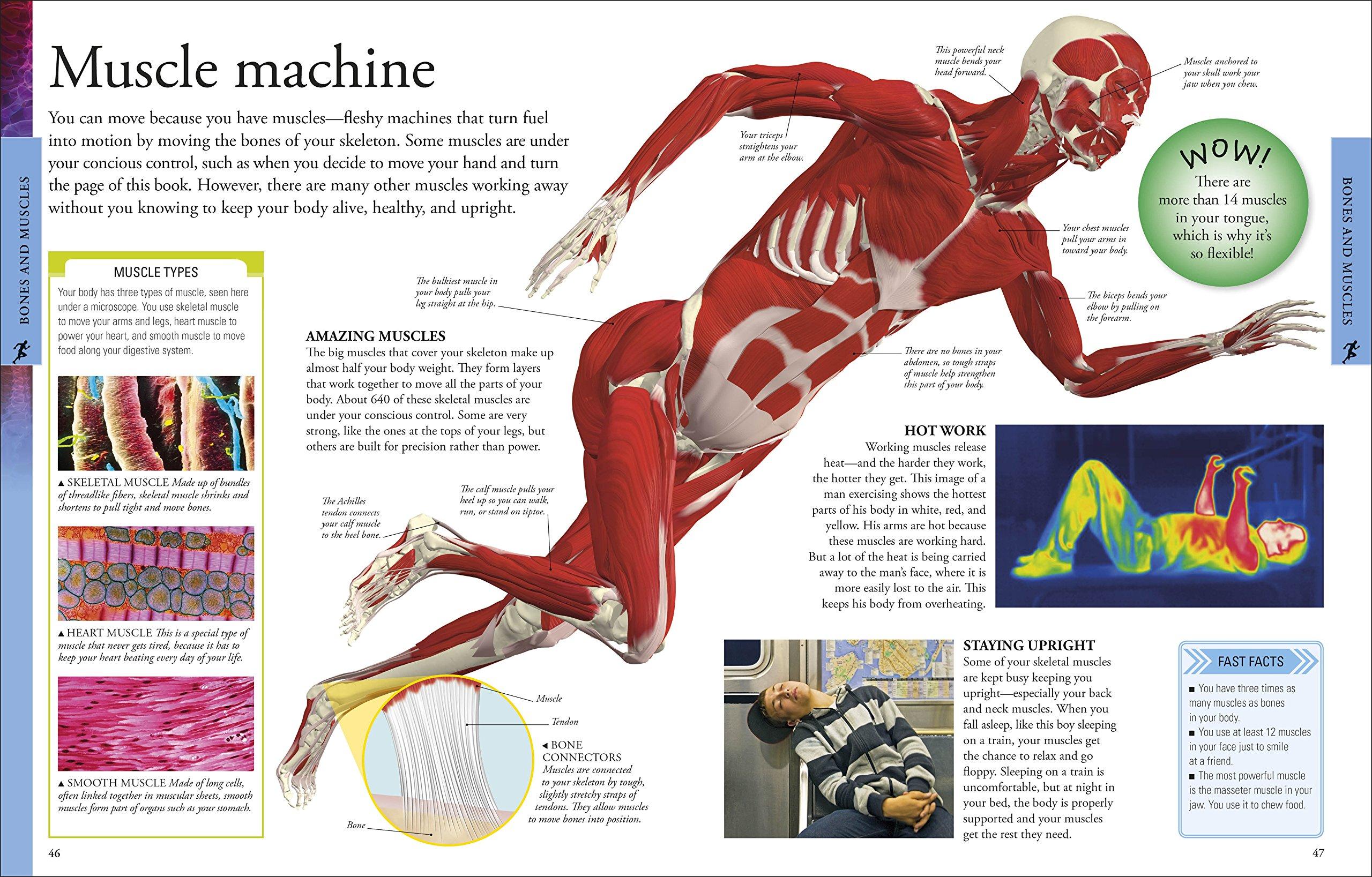 Human Body A Visual Encyclopedia Dk 0690472093077 Amazon Books