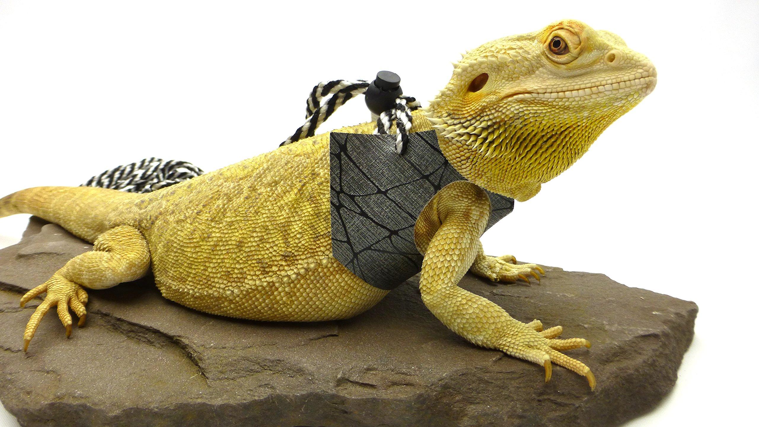 Ogle Lizard Leash, Limited Edition Black Web (large size)