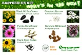 US Native Wildflower Seed Ball Kit. Makes 100