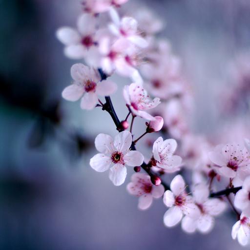 Amazon Com Cherry Blossoms Live Wallpaper Appstore For