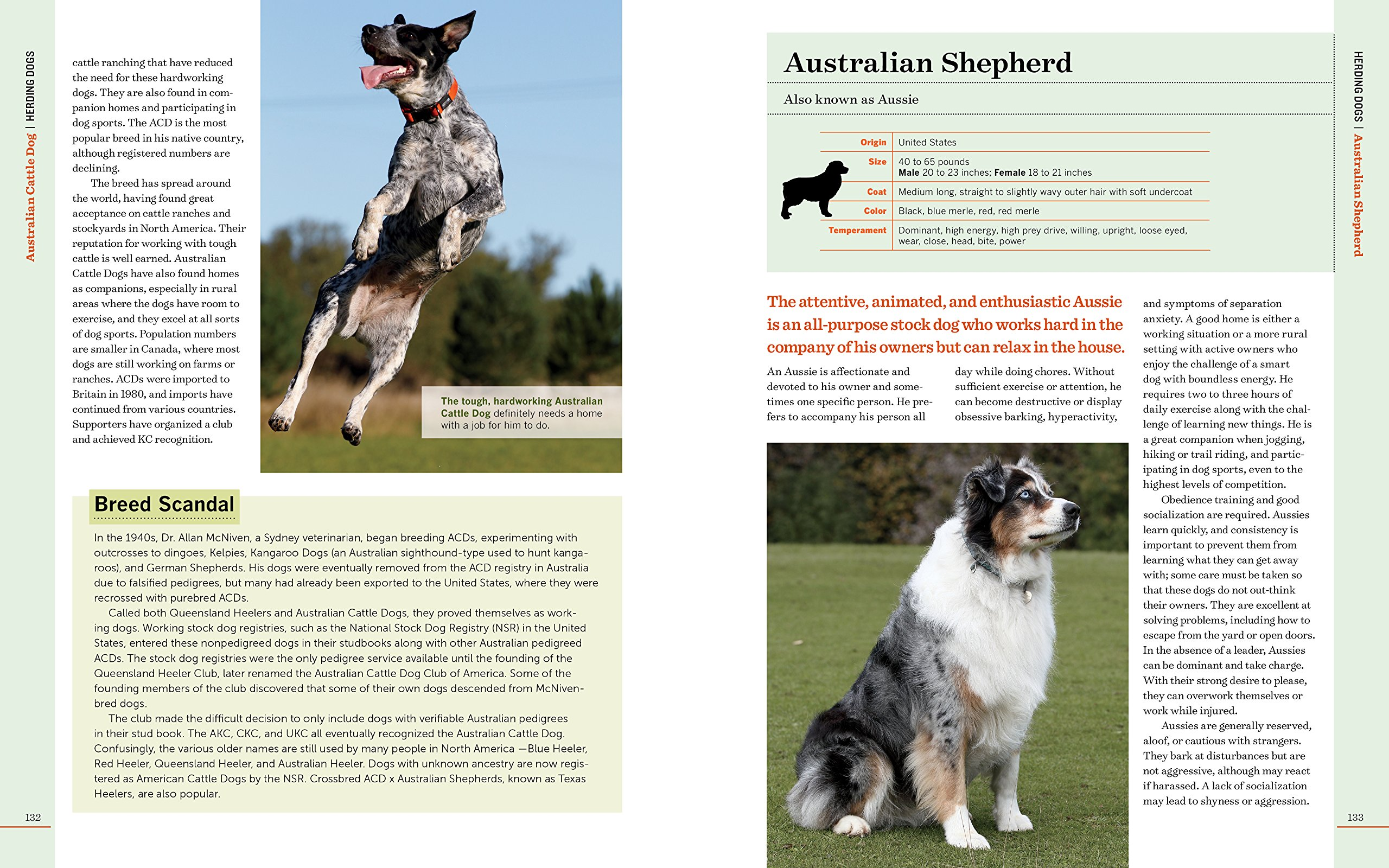 Amazon.com: Farm Dogs: A Comprehensive Breed Guide to 93 Guardians,  Herders, Terriers, and Other Canine Working Partners (9781612125923): Janet  Vorwald ...