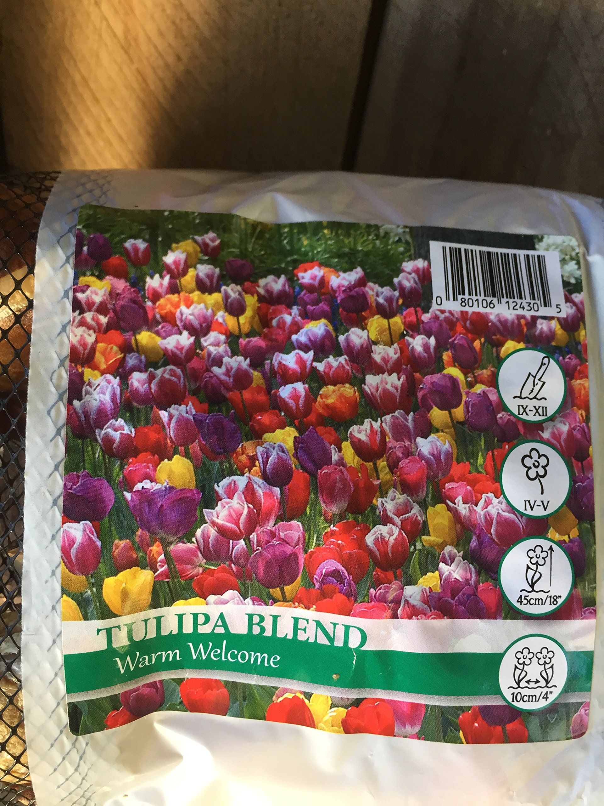 50 Warm Welcome Tulip Bulbs - Super-sized X-tra Value Bag!!