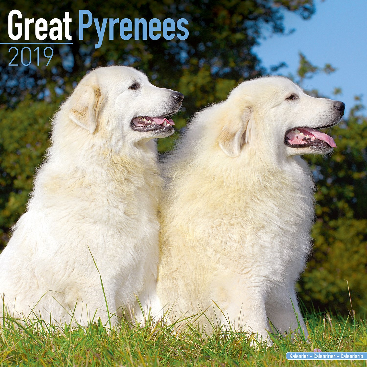Great Pyrenees Dog Breed Pictures, 1