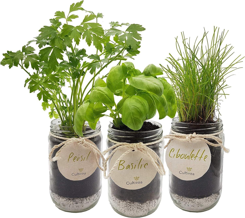 Kit d'herbes aromatiques