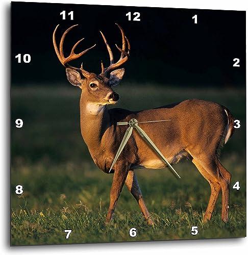 3dRose DPP_94585_3 White-Tailed Deer, Choke Canyon SP, Texas-US44 RNU0292-Rolf Nussbaumer-Wall Clock, 15 by 15-Inch