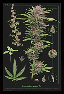 product image for Frame USA Cannabis Anatomy Poster (Black Affordable Medium Frame)(24x36)