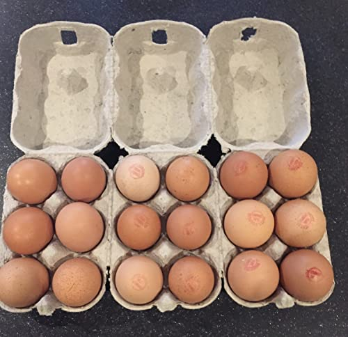 24 x Egg Box labels Personalised Chicken Hen Free Range Boxes ...