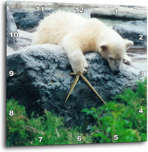 3dRose dpp_17959_1 Curious Polar Bear Cub Wall Clock, 10 by 10-Inch
