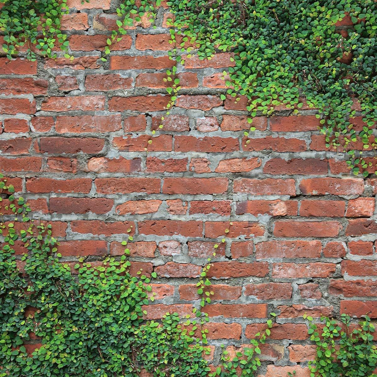 ダークカラー 木製背景 写真撮影用 ブラウン ヴィンテージ スタジオ 背景 子供の写真 背景 折り目なし 10x10ft brick8 B07LGJCTVC