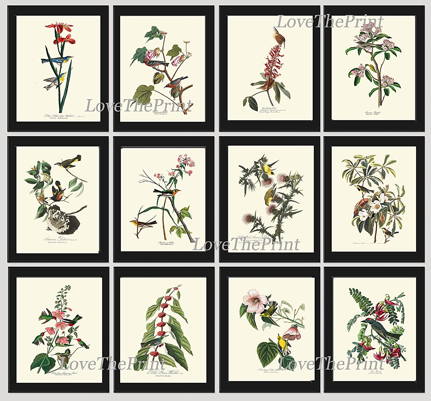 a88a2b3cdc9 Amazon.com  Bird Print Set of 12 Art Beautiful James Audubon Collection of  Birds Flowers Spring Summer Green Nature Home Wall Room Decor Unframed   Handmade