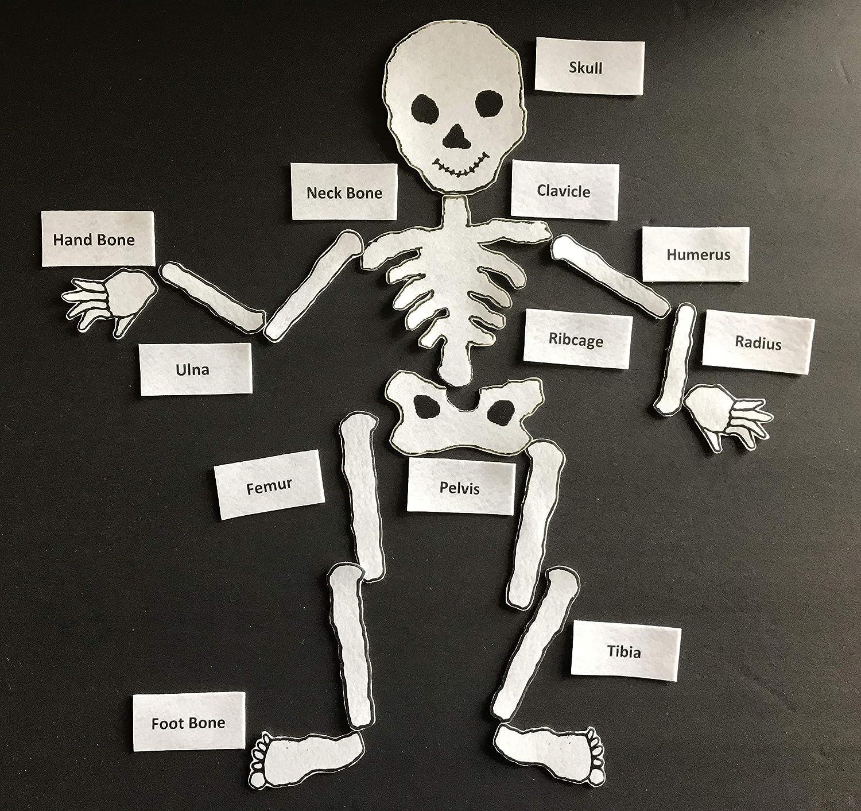 Skeleton Felt Set