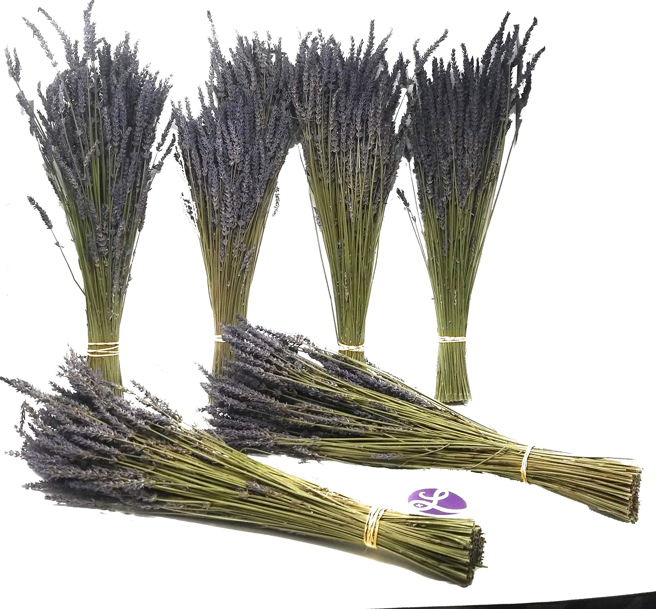 Findlavender - Lavender Dried Premium Bundles - 22 to 24'' - 130 to 150 Stems - Can Be Used for Any Ocassion - Perfect for your wedding! - 6 Bundles by Findlavender (Image #1)