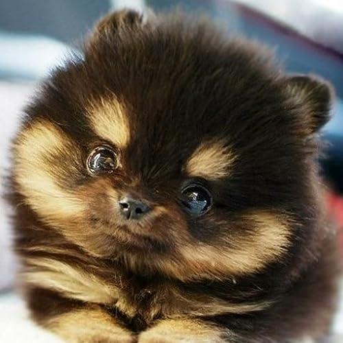 Baby Animal Pictures Amazon Com