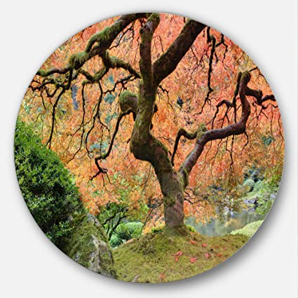 Amazoncom Designart Old Japanese Maple Tree Landscape Photography