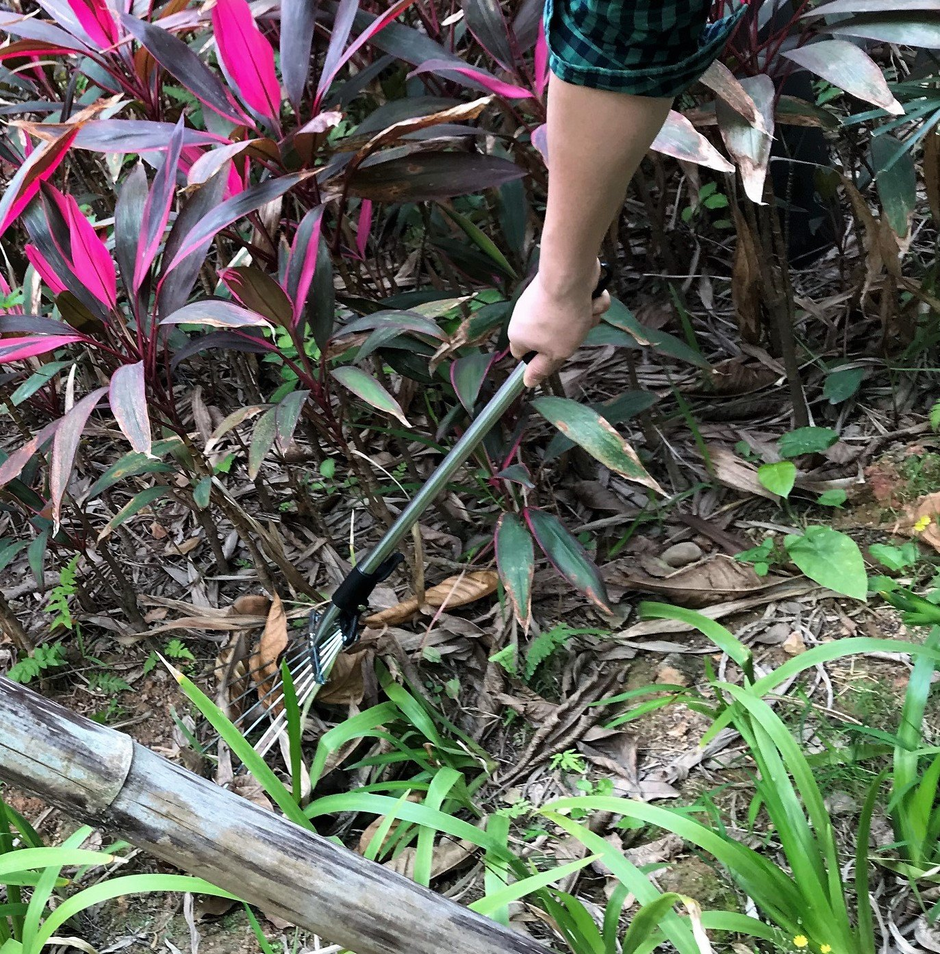 ZaoProteks ZP5802 Stainless Steel Garden Leaf Rakes, Hay Rake, Lawn rake (Black Handle) by ZP ZaoProteks (Image #7)