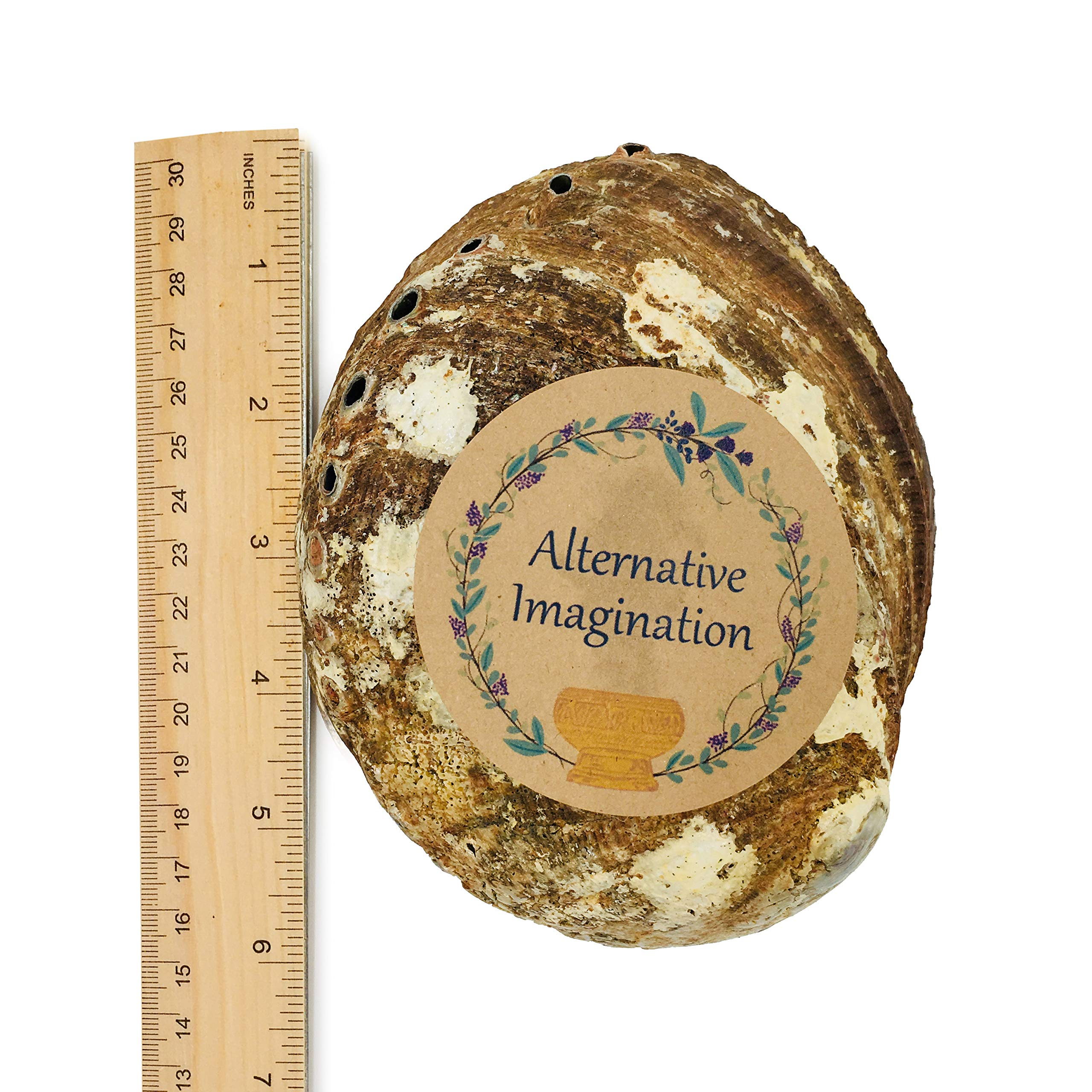Alternative Imagination Hand Selected Abalone Shell, 5.5 Inches or Larger. Perfect for Holding Incense, Trinkets, and More by Alternative Imagination (Image #4)