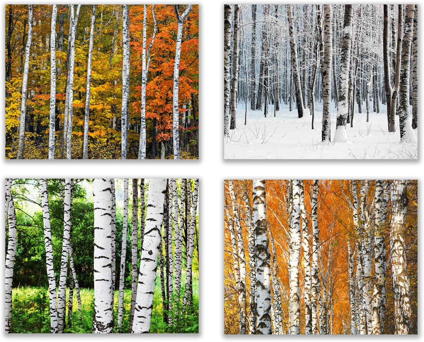 """Infinity Creations Birch Trees Forest for All Seasons Inspiration (Set of 4): Modern Art Decor Unframed Poster Prints (8""""x10"""")"""