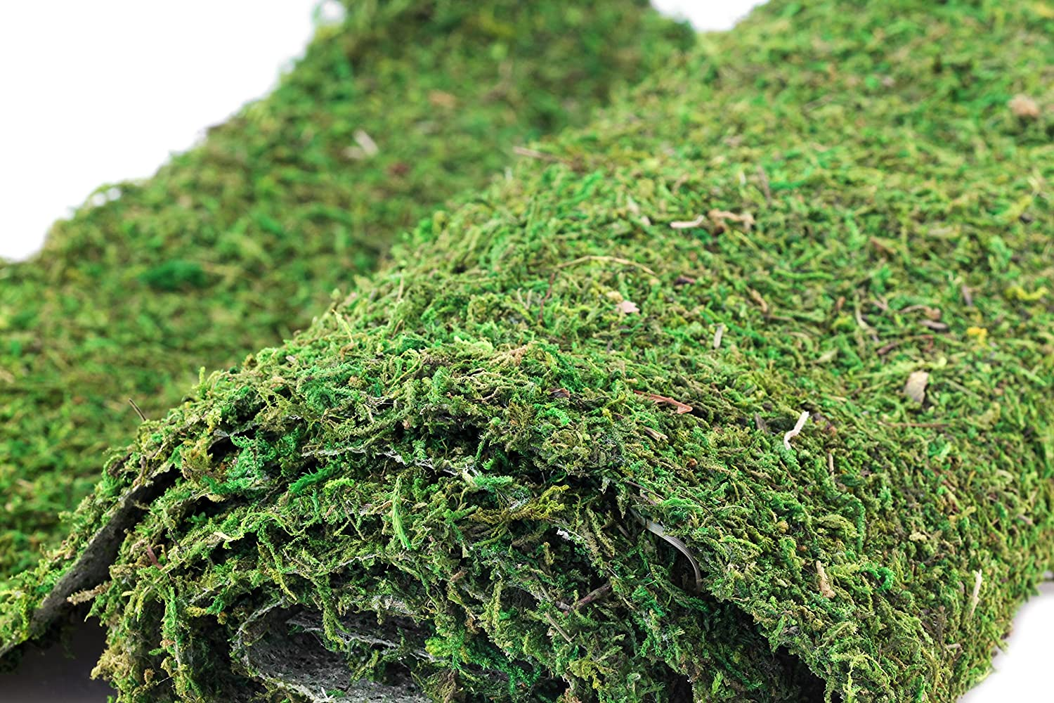 Amazon.com : Super Moss Instant Moss Mat Green 18X48 : Vegetable Plants :  Garden U0026 Outdoor