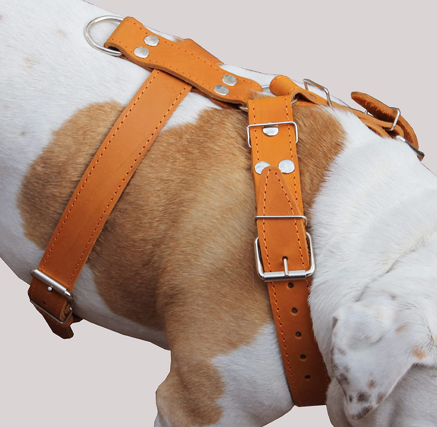 Tan Genuine Leather Dog Harness, Large to XLarge. 35 -39  Chest, 1.5  Wide Straps, Great Dane Cane Corso