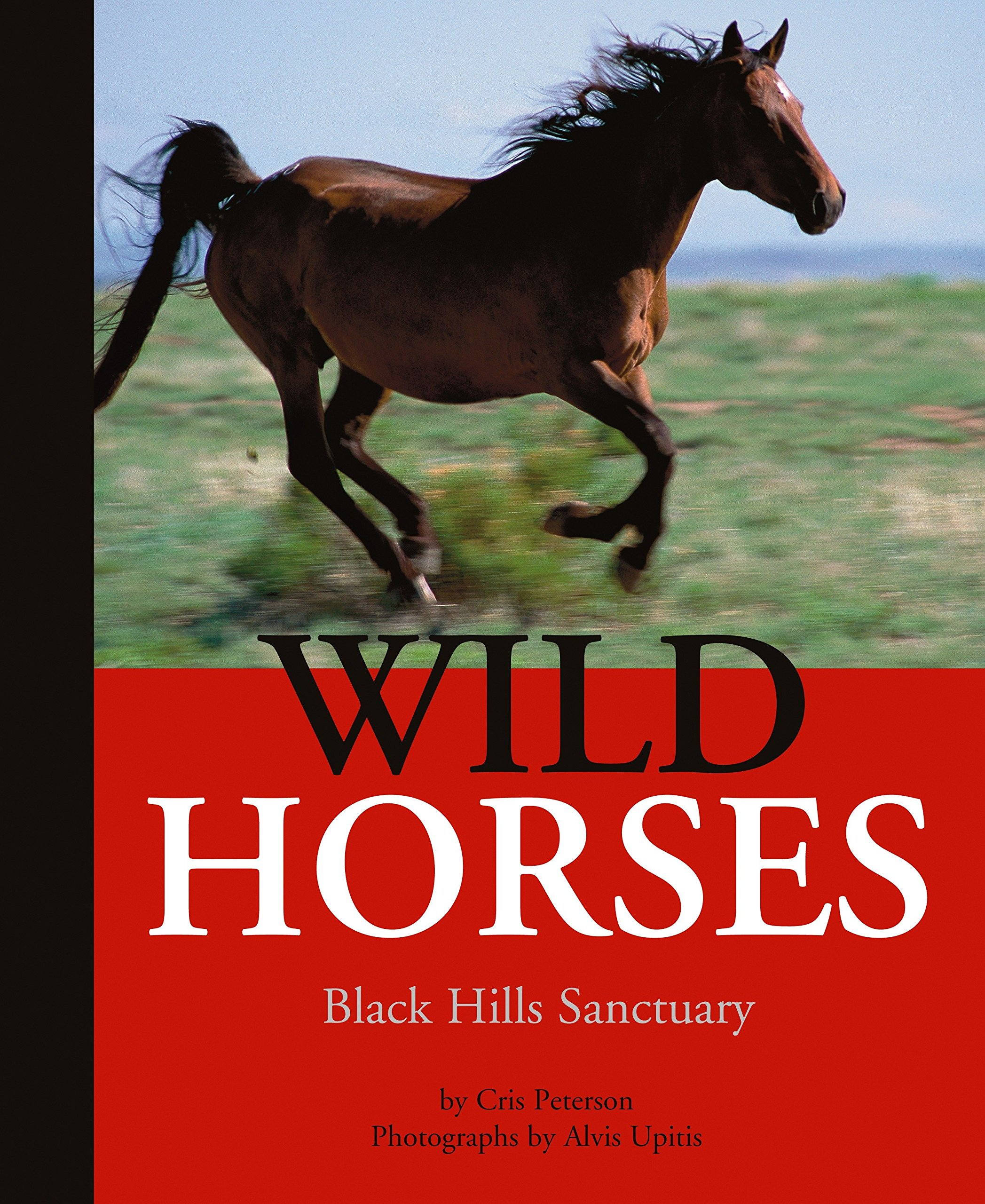 Download Wild Horses: Black Hills Sanctuary pdf epub