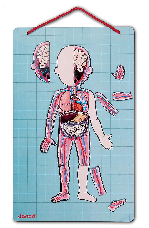 Janod - Bodymagnet, juego de anatomía magnético (J05491): Amazon.es ...
